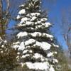 雪景色-借金生活脱出日記