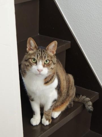 怒る猫-借金生活脱出日記